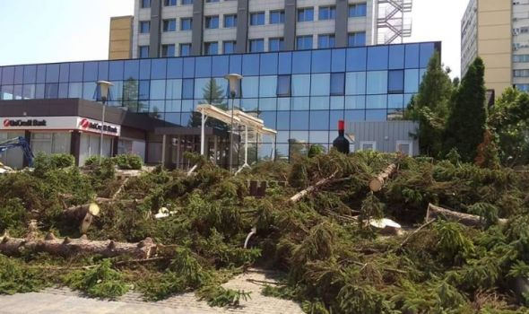 "Posečeni borovi ispred hotela ""Kragujevac"", građani negoduju"