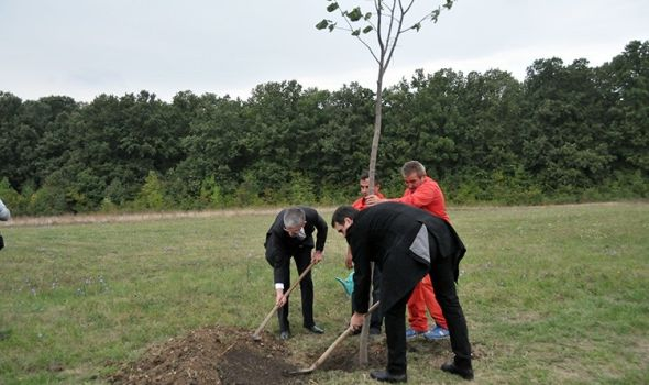 Gradonačelnik zasadio drvo mira