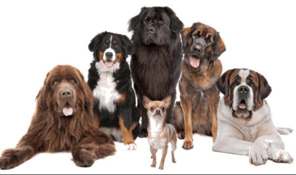 CACIB Kragujevac 2018: Međunarodna izložba pasa u Velikom parku