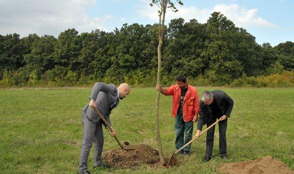 Petrašinović zasadio drvo mira