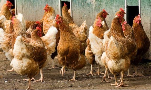 Kragujevčani se žale na držanje domaćih životinja i radno vreme kafića