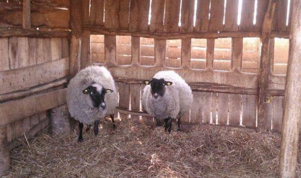 Najavljeno osnivanje Reproduktivnog centra za razvoj ovčarstva