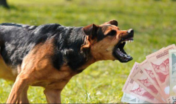 U slučaju ujeda psa ili mačke lutalice odšteta do 80.000 dinara