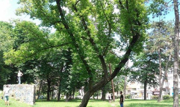 Da li stabla prete da se obruše na posetioce Velikog parka? (FOTO)