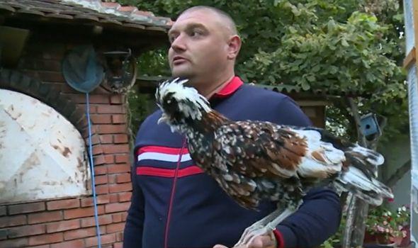 Budilnik mu ne treba: Kragujevčanin Dalibor Portić gaji ukrasnu živinu, u dvorištu više od 100 ptica