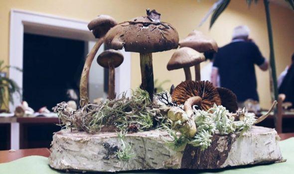 Izložba gljiva na PMF-u