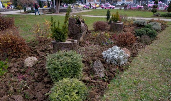 Hortikulturni radovi: JKP Šumadija sadi, građani kradu (FOTO)