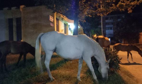 Konji izašli sa hipodroma, pa šetali Bagremarom (FOTO)