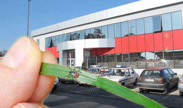Najezda KRPELJA u Kragujevcu: Hitna pomoć naplaćuje vađenje, ali novac ide za Gavrilovo lečenje