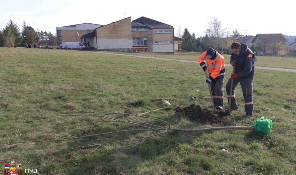 Završeno ozelenjavanje grada za ovu godinu, sledeće nastavak sadnje drveća