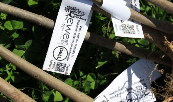 Posadi svoj hlad: 200 belih jasenova za Kragujevac