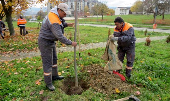 U toku jesenja sadnja drveća (FOTO)