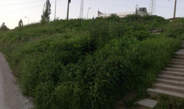 ZELENE POVRŠINE po gradu ZAPUŠTENE: Zašto i gde se sređuje? (FOTO)