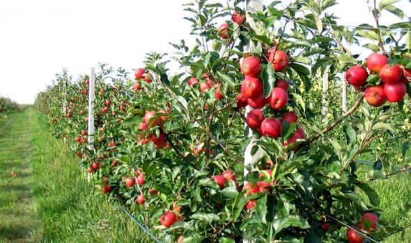 U spoljno-trgovinskoj razmeni agrarnih proizvoda suficit 31,4 miliona evra