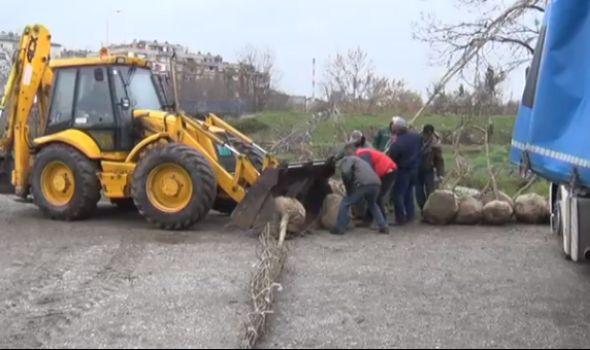 Javor, jasen i lipa: Prolećno popunjavanje drvoreda u užem gradskom jezgru