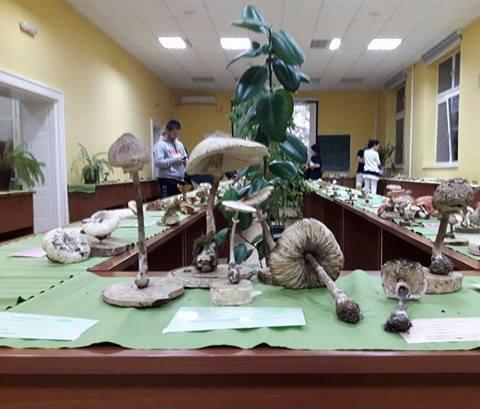 Jubilarna Izložba gljiva na PMF-u